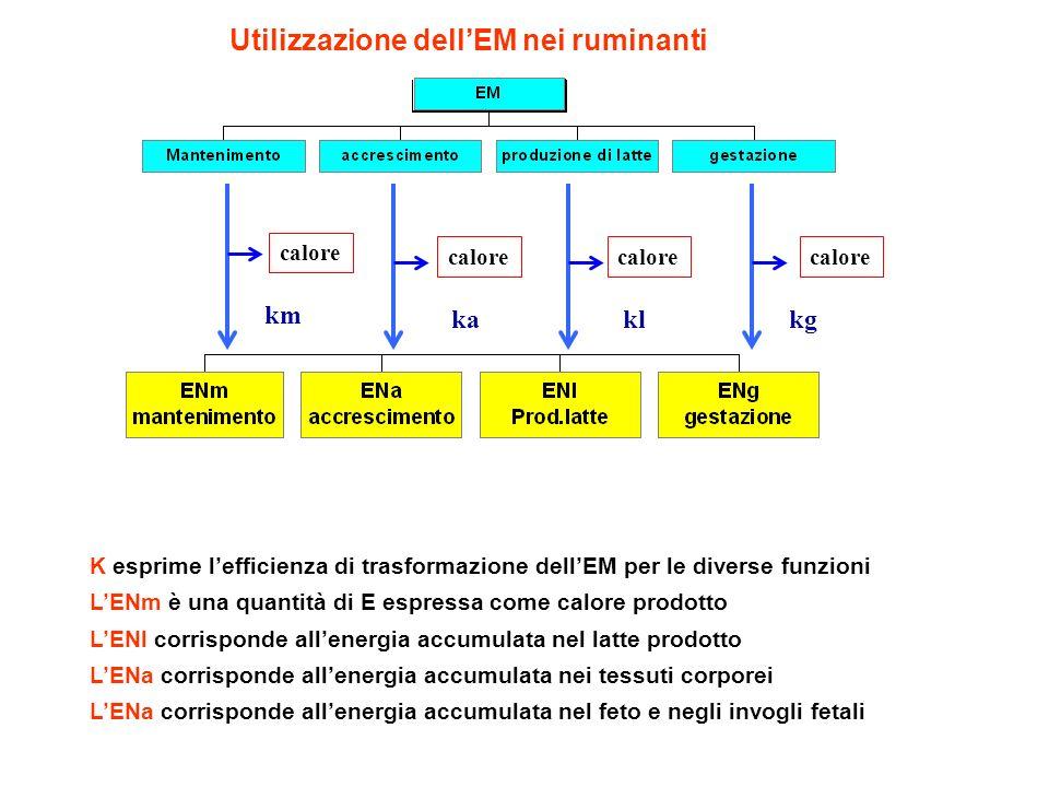 Utilizzazione dell'EM nei ruminanti