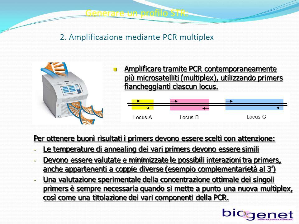 Generare un profilo STR: 2. Amplificazione mediante PCR multiplex