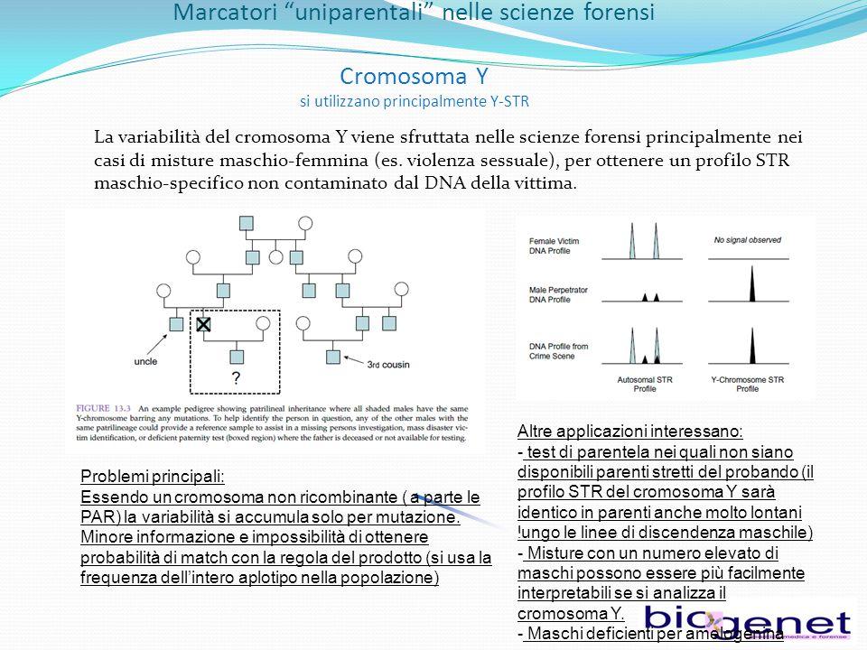 Marcatori uniparentali nelle scienze forensi Cromosoma Y si utilizzano principalmente Y-STR