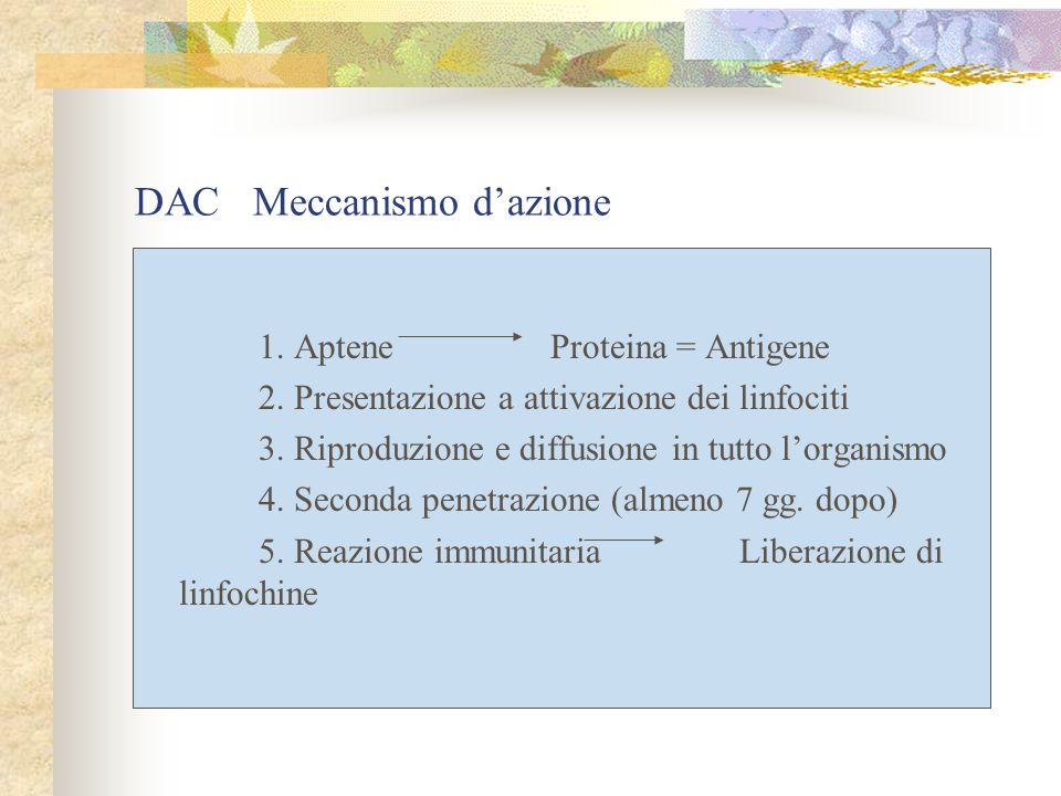 DAC Meccanismo d'azione