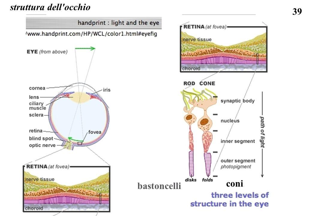 struttura dell occhio coni bastoncelli