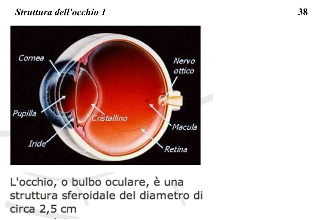 Struttura dell occhio 1