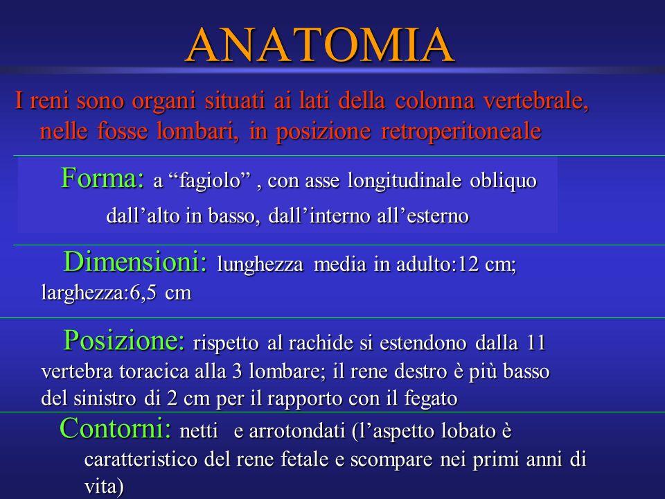 ANATOMIA I reni sono organi situati ai lati della colonna vertebrale, nelle fosse lombari, in posizione retroperitoneale.