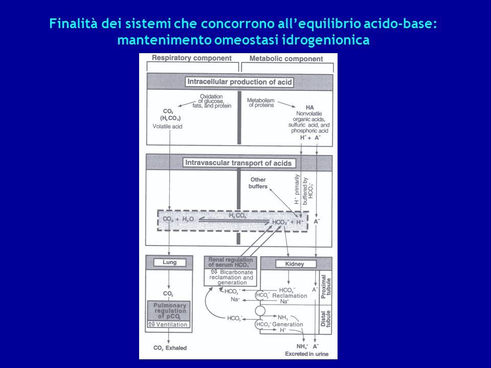 Finalità dei sistemi che concorrono all'equilibrio acido-base: mantenimento omeostasi idrogenionica