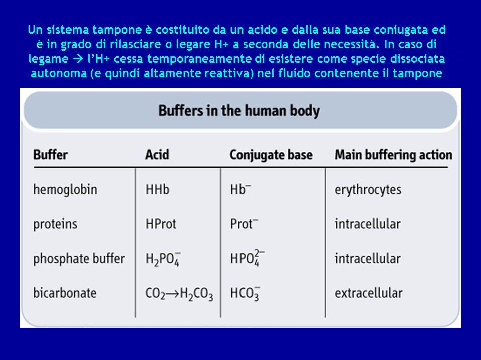 Un sistema tampone è costituito da un acido e dalla sua base coniugata ed è in grado di rilasciare o legare H+ a seconda delle necessità.