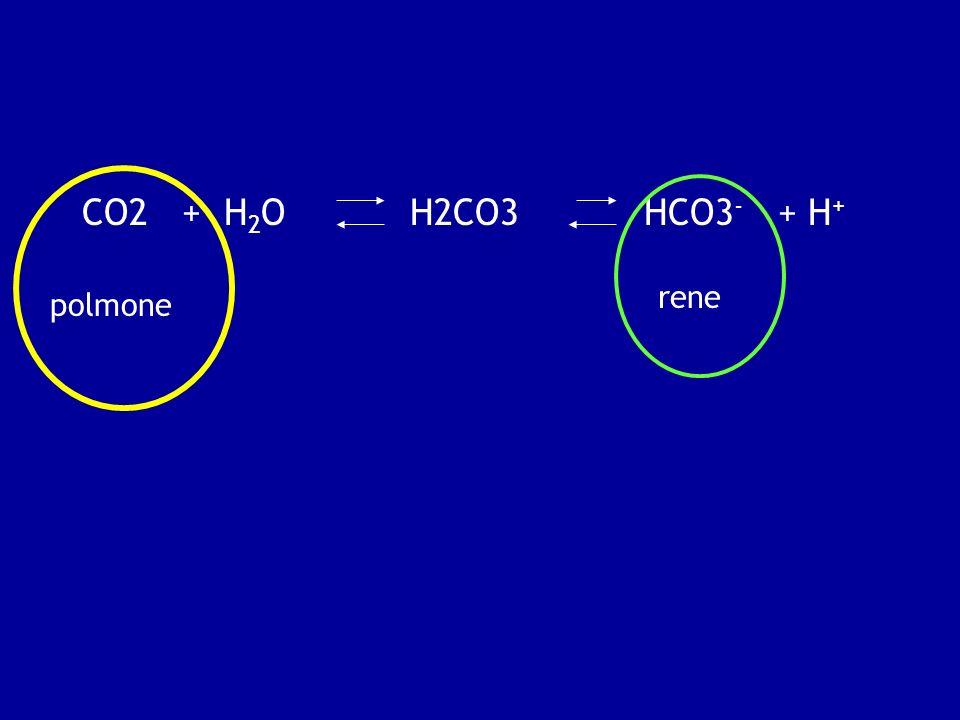 CO2 + H2O H2CO3 HCO3- + H+ rene polmone