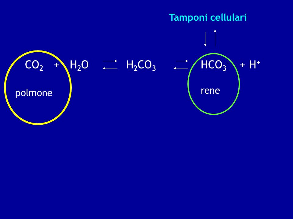 Tamponi cellulari CO2 + H2O H2CO3 HCO3- + H+ rene polmone