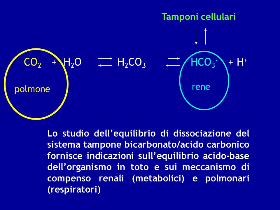 CO2 + H2O H2CO3 HCO3- + H+ Tamponi cellulari rene polmone