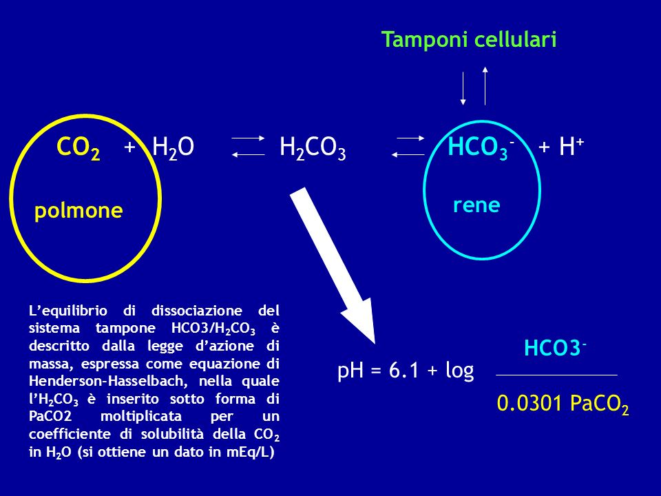 CO2 + H2O H2CO3 HCO3- + H+ Tamponi cellulari rene polmone HCO3-