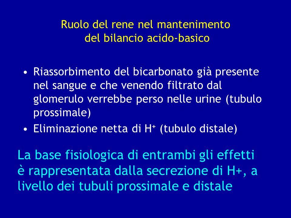 Ruolo del rene nel mantenimento del bilancio acido-basico