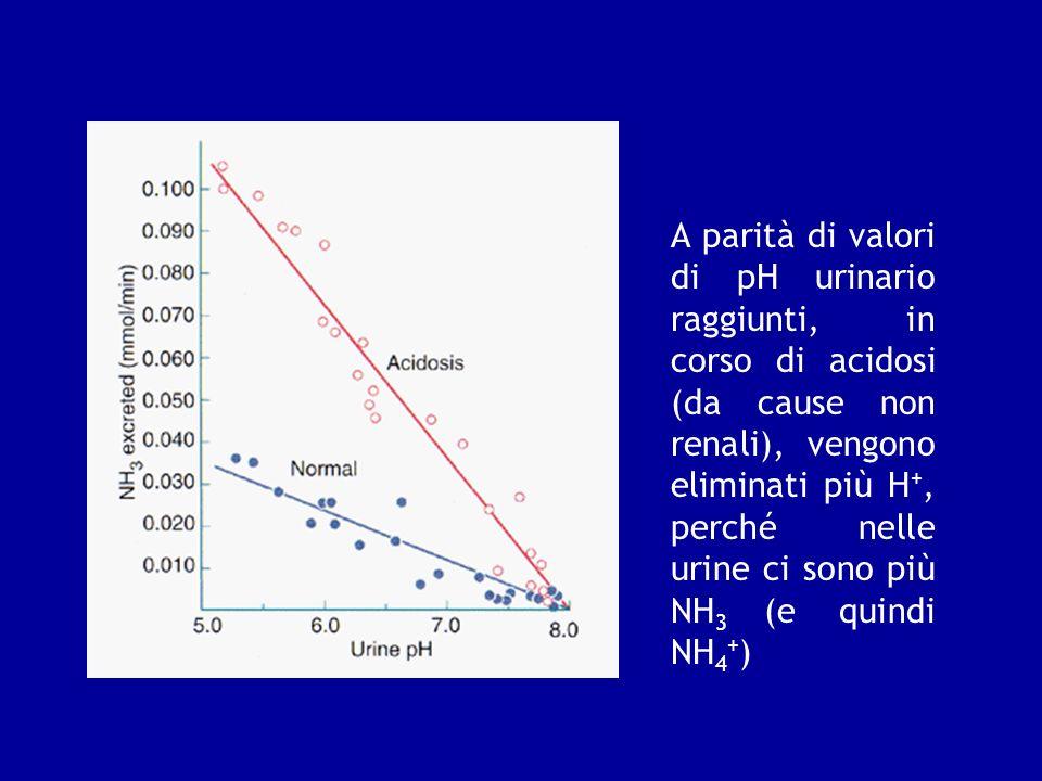 A parità di valori di pH urinario raggiunti, in corso di acidosi (da cause non renali), vengono eliminati più H+, perché nelle urine ci sono più NH3 (e quindi NH4+)