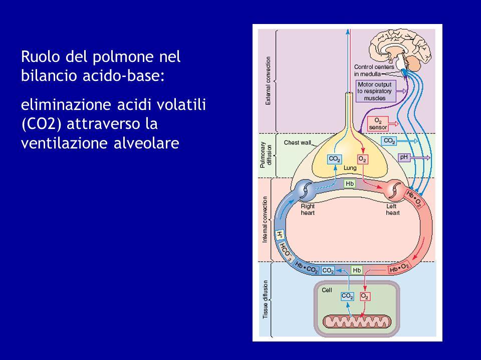 Ruolo del polmone nel bilancio acido-base:
