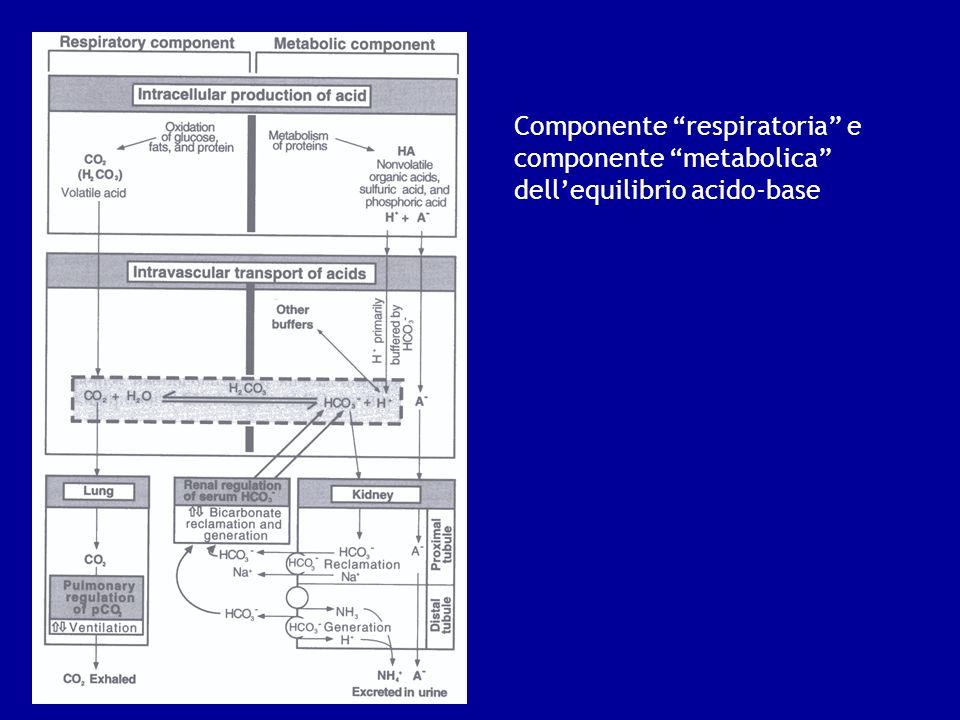 Componente respiratoria e componente metabolica dell'equilibrio acido-base