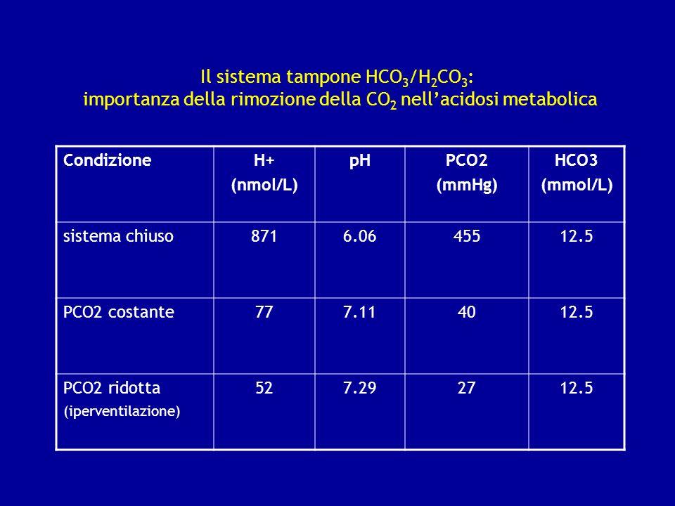 Il sistema tampone HCO3/H2CO3: importanza della rimozione della CO2 nell'acidosi metabolica