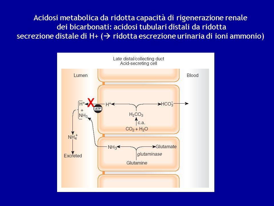 X Acidosi metabolica da ridotta capacità di rigenerazione renale