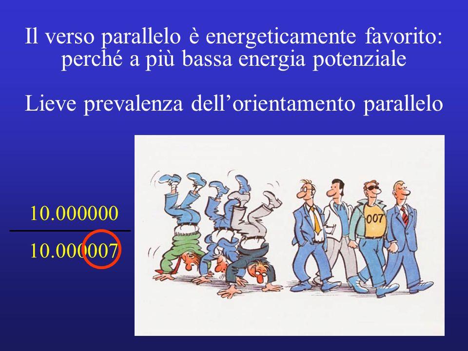 Il verso parallelo è energeticamente favorito: perché a più bassa energia potenziale Lieve prevalenza dell'orientamento parallelo