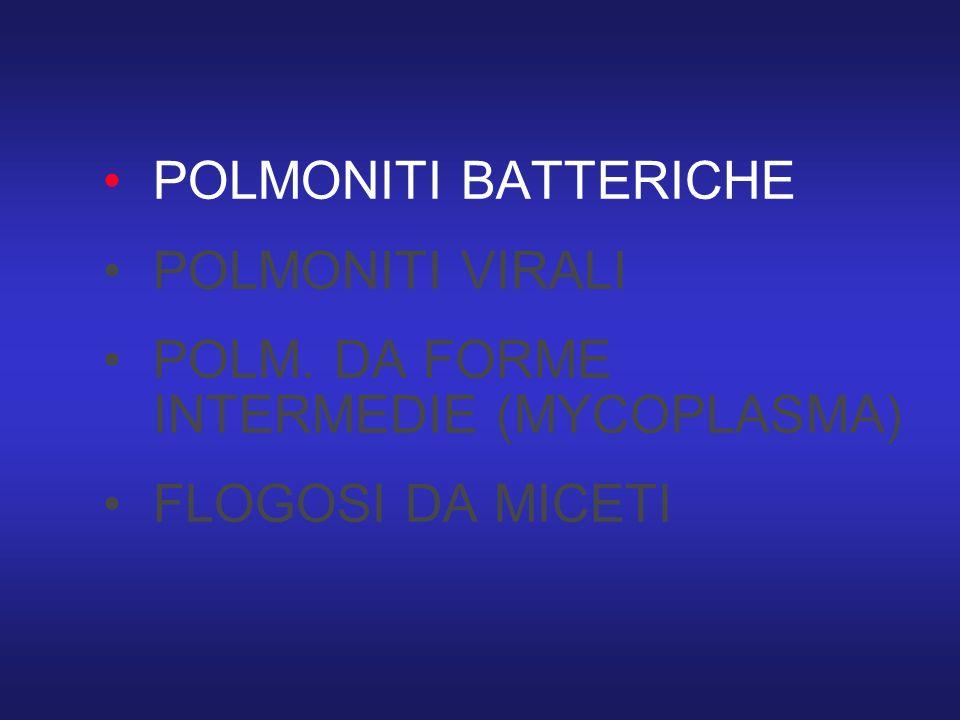 POLMONITI BATTERICHE POLMONITI VIRALI POLM. DA FORME INTERMEDIE (MYCOPLASMA) FLOGOSI DA MICETI