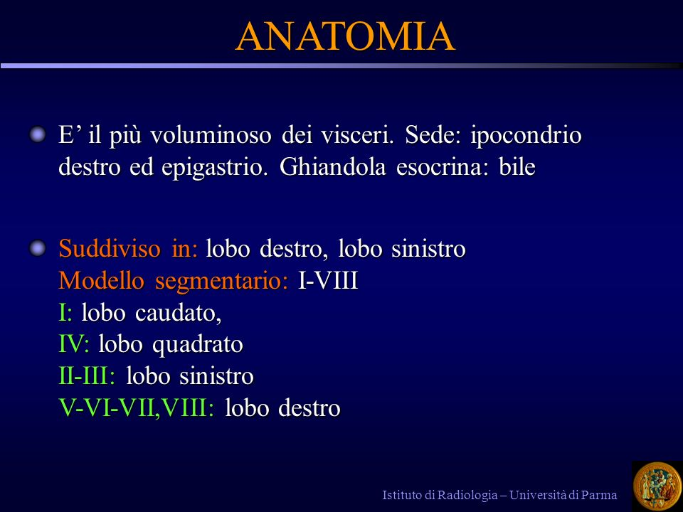 ANATOMIA E' il più voluminoso dei visceri. Sede: ipocondrio destro ed epigastrio. Ghiandola esocrina: bile.
