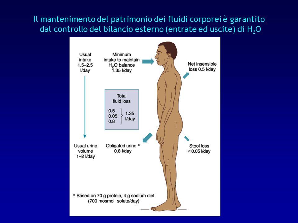 Il mantenimento del patrimonio dei fluidi corporei è garantito