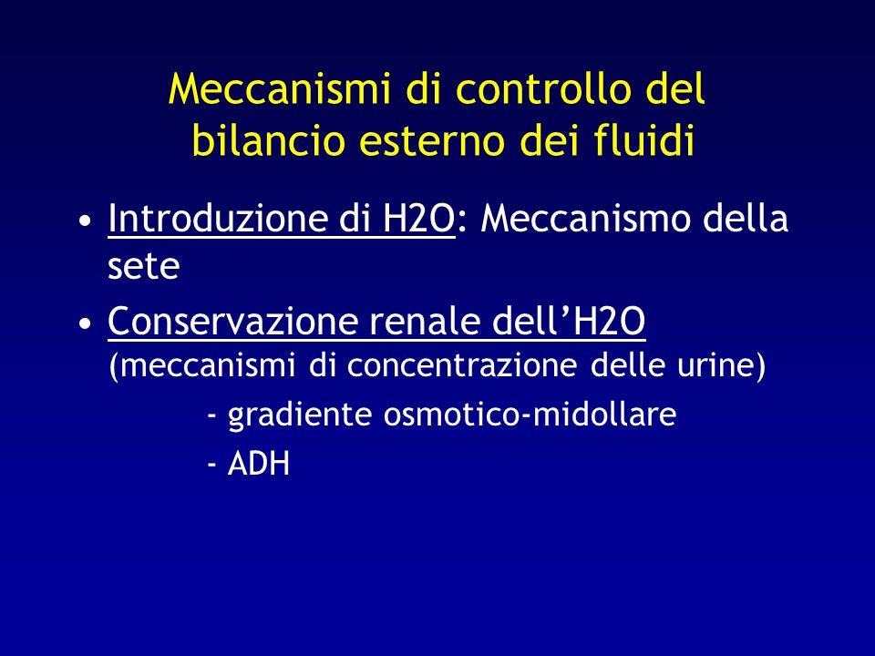 Meccanismi di controllo del bilancio esterno dei fluidi