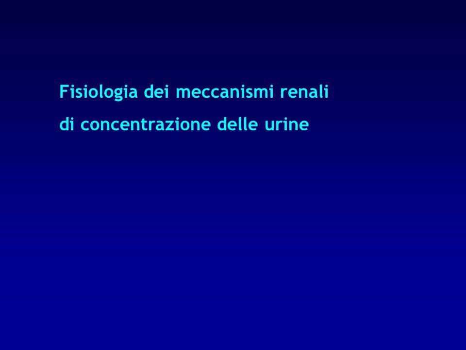Fisiologia dei meccanismi renali