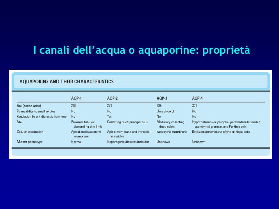 I canali dell'acqua o aquaporine: proprietà
