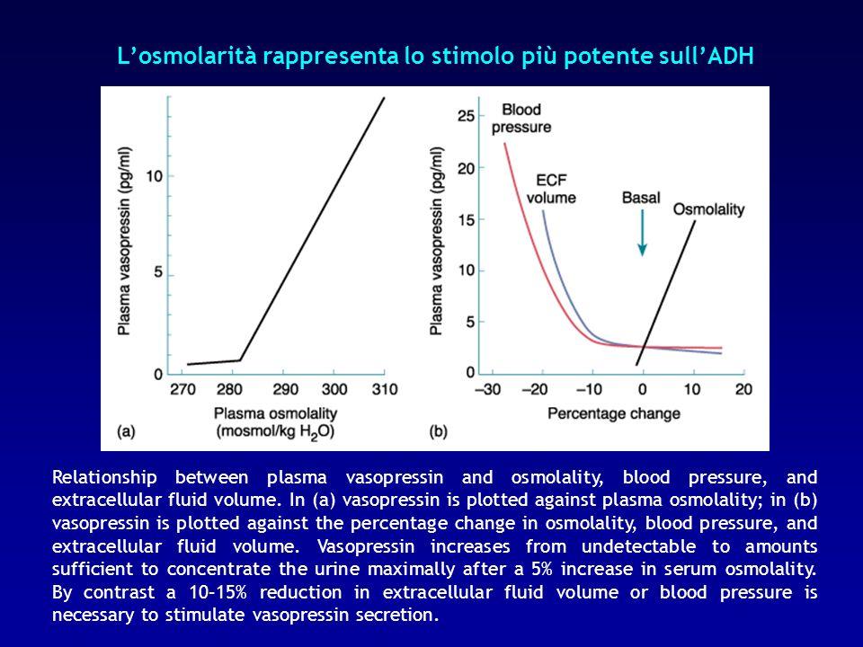 L'osmolarità rappresenta lo stimolo più potente sull'ADH