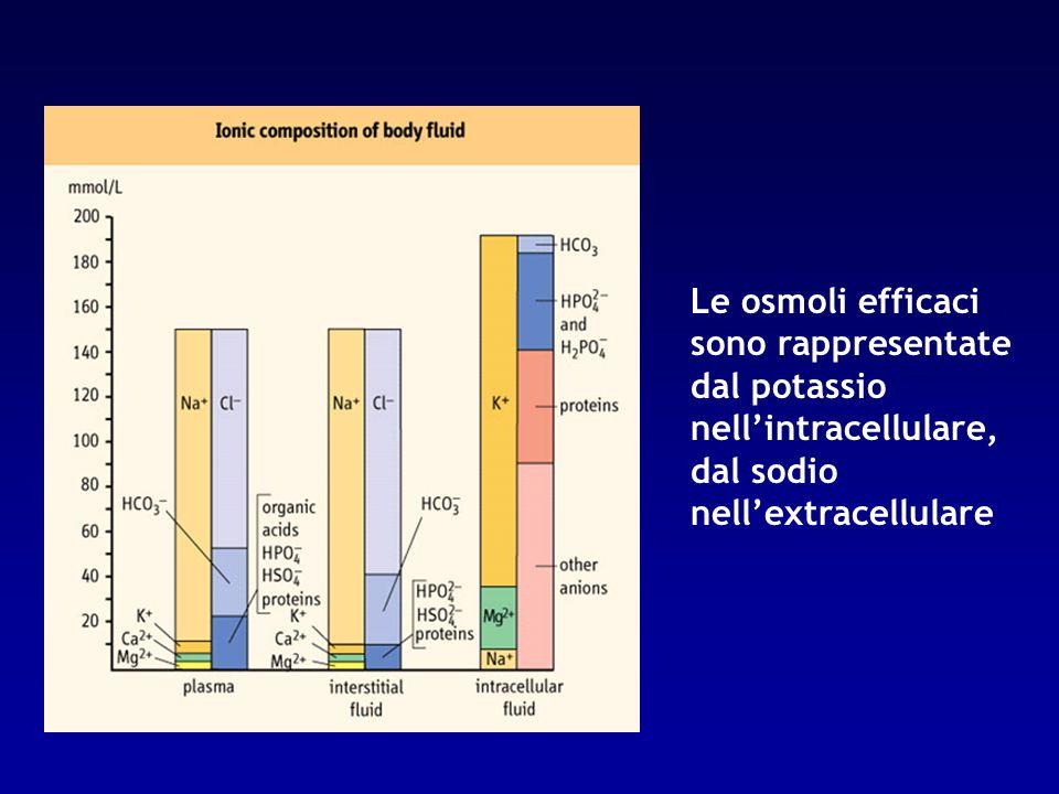 Le osmoli efficaci sono rappresentate dal potassio nell'intracellulare, dal sodio nell'extracellulare