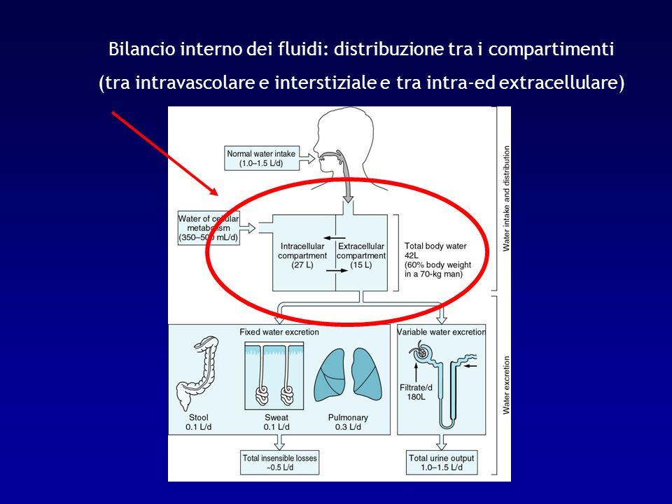 Bilancio interno dei fluidi: distribuzione tra i compartimenti