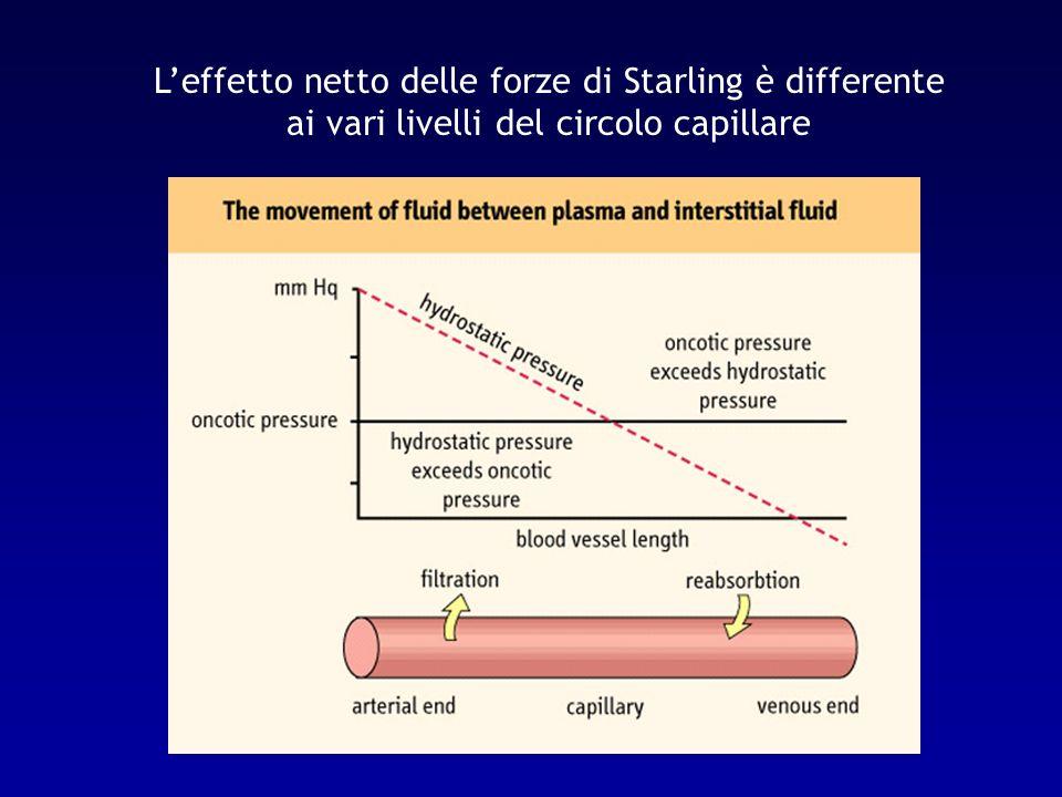 L'effetto netto delle forze di Starling è differente