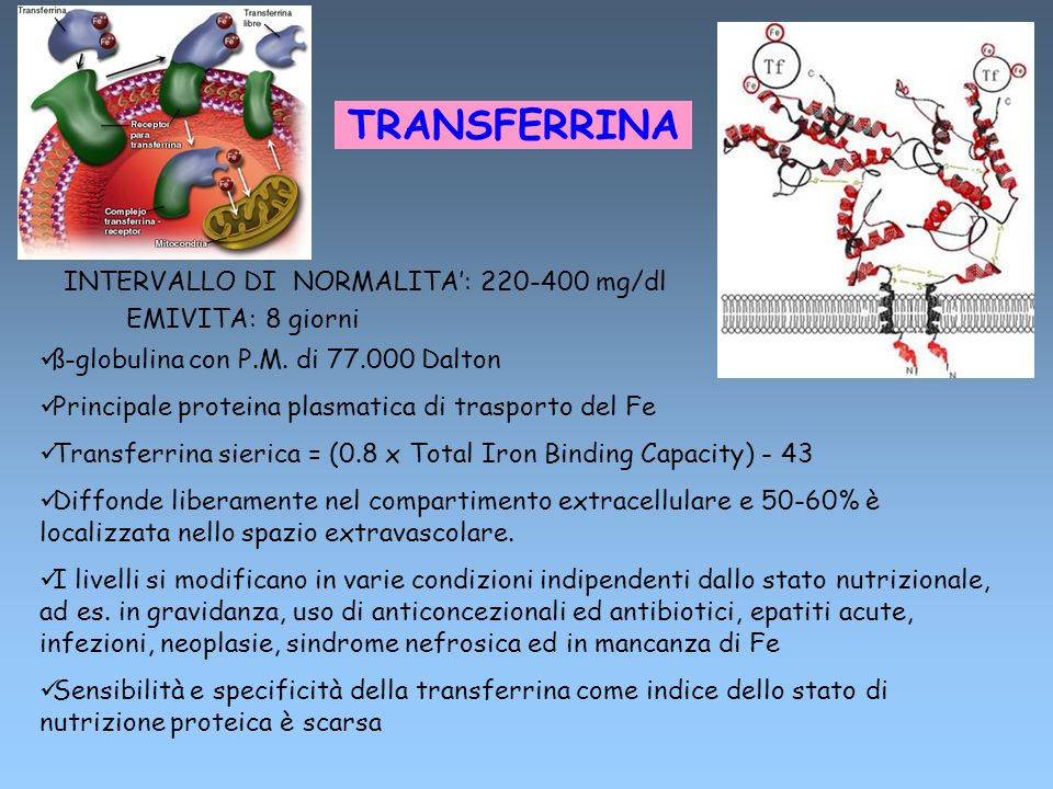 TRANSFERRINA INTERVALLO DI NORMALITA': 220-400 mg/dl EMIVITA: 8 giorni