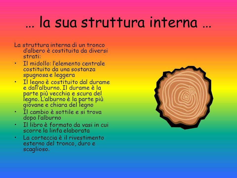 … la sua struttura interna …