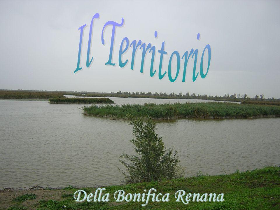 Il Territorio Della Bonifica Renana
