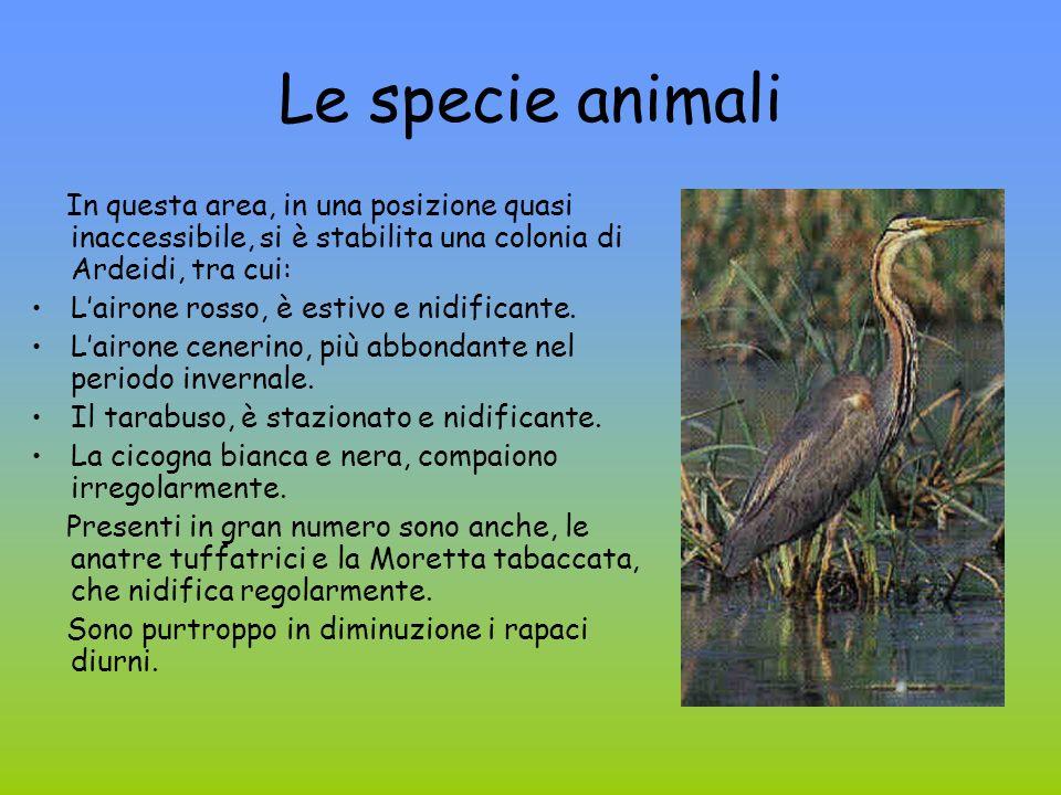 Le specie animali In questa area, in una posizione quasi inaccessibile, si è stabilita una colonia di Ardeidi, tra cui: