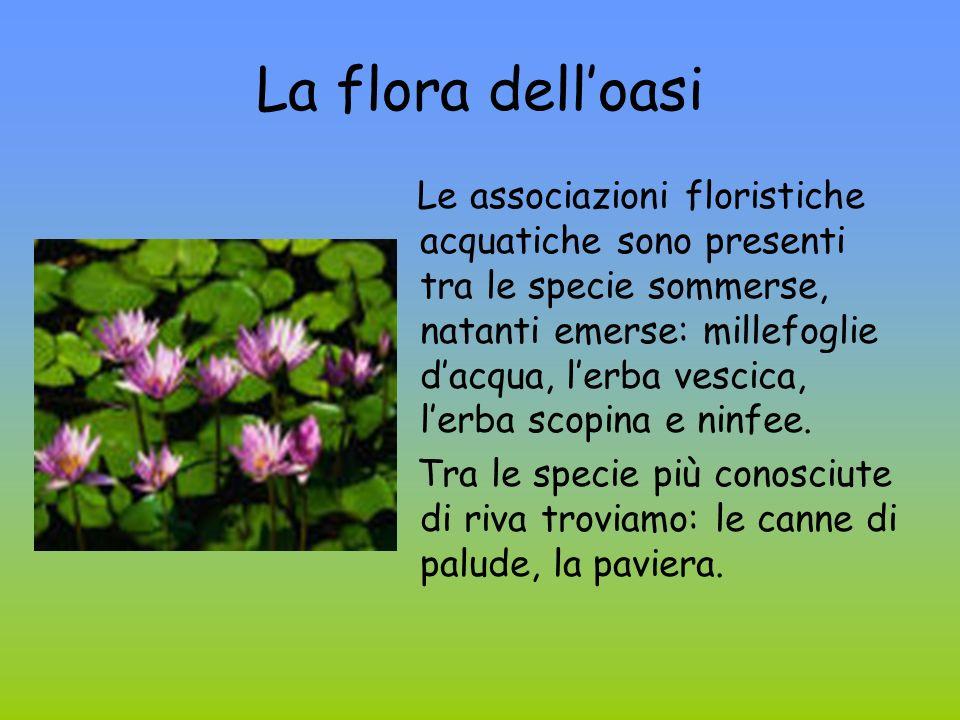 La flora dell'oasi