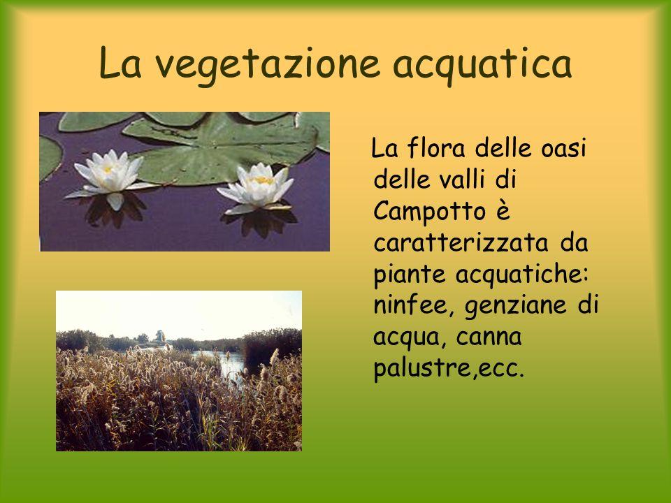 La vegetazione acquatica