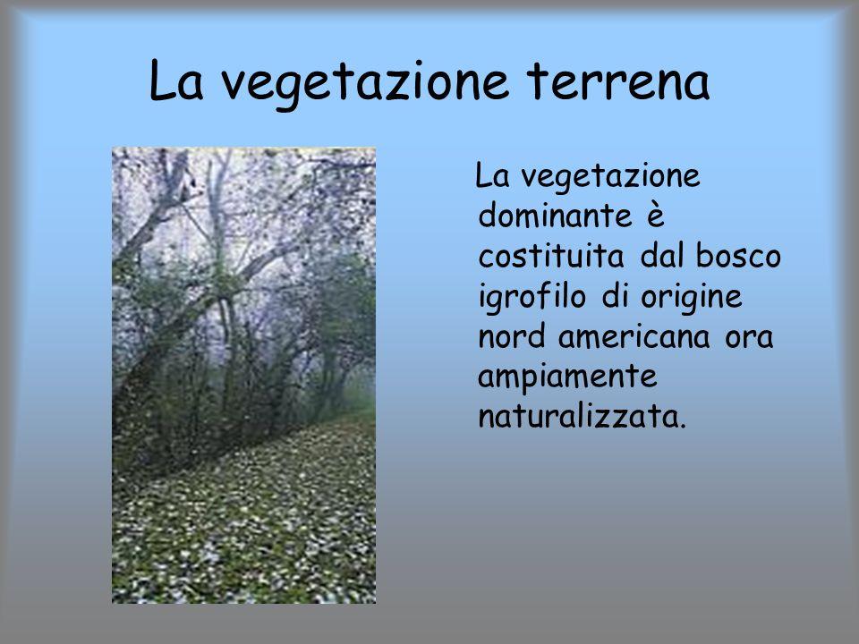 La vegetazione terrena
