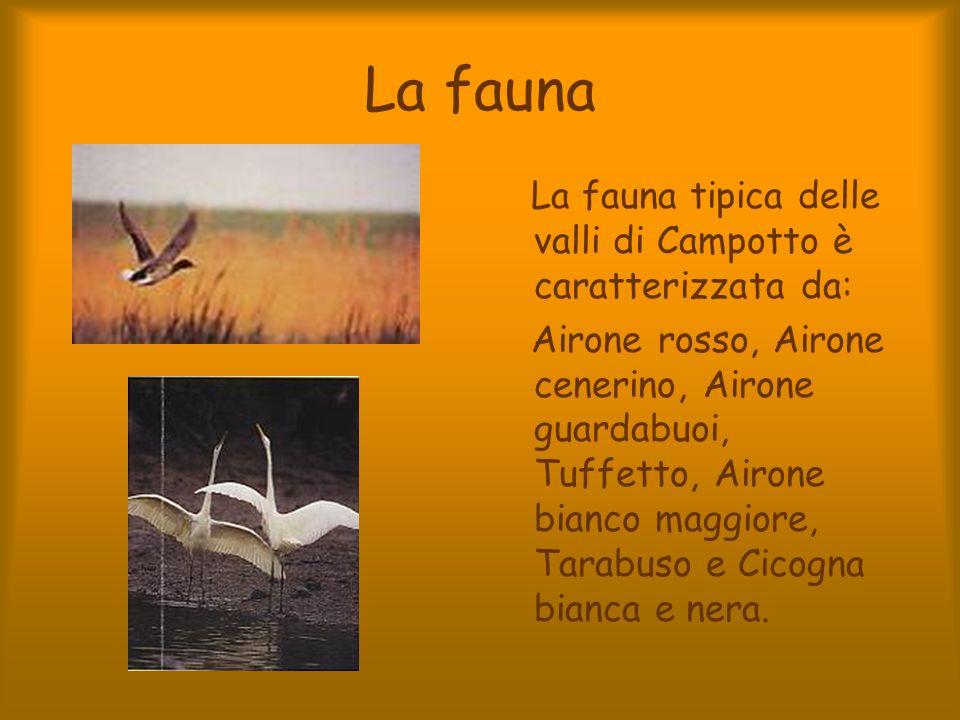 La fauna La fauna tipica delle valli di Campotto è caratterizzata da: