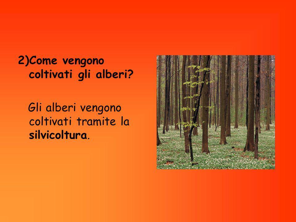 2)Come vengono coltivati gli alberi
