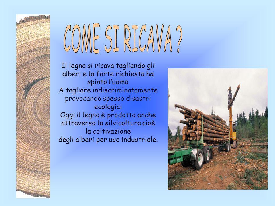 COME SI RICAVA Il legno si ricava tagliando gli alberi e la forte richiesta ha spinto l'uomo.
