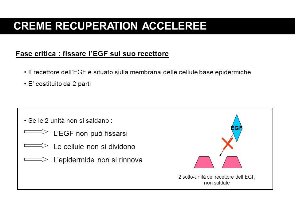 2 sotto-unità del recettore dell'EGF, non saldate