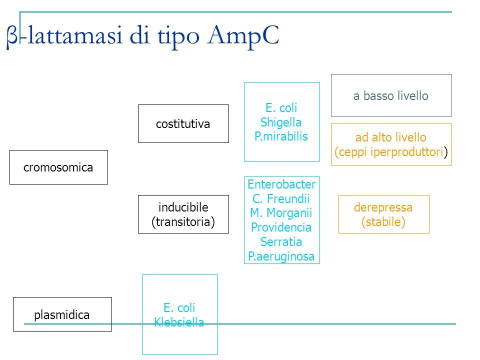 β-lattamasi di tipo AmpC