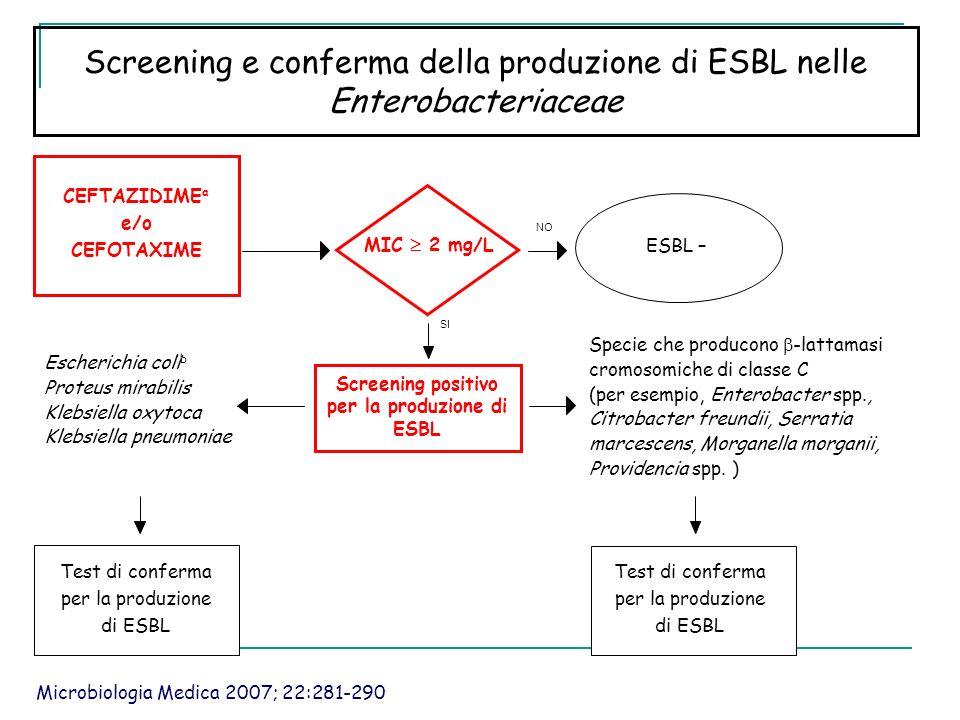 Screening positivo per la produzione di ESBL
