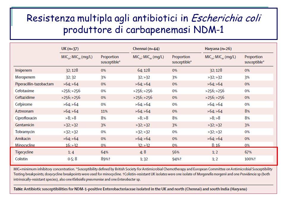 Resistenza multipla agli antibiotici in Escherichia coli produttore di carbapenemasi NDM-1