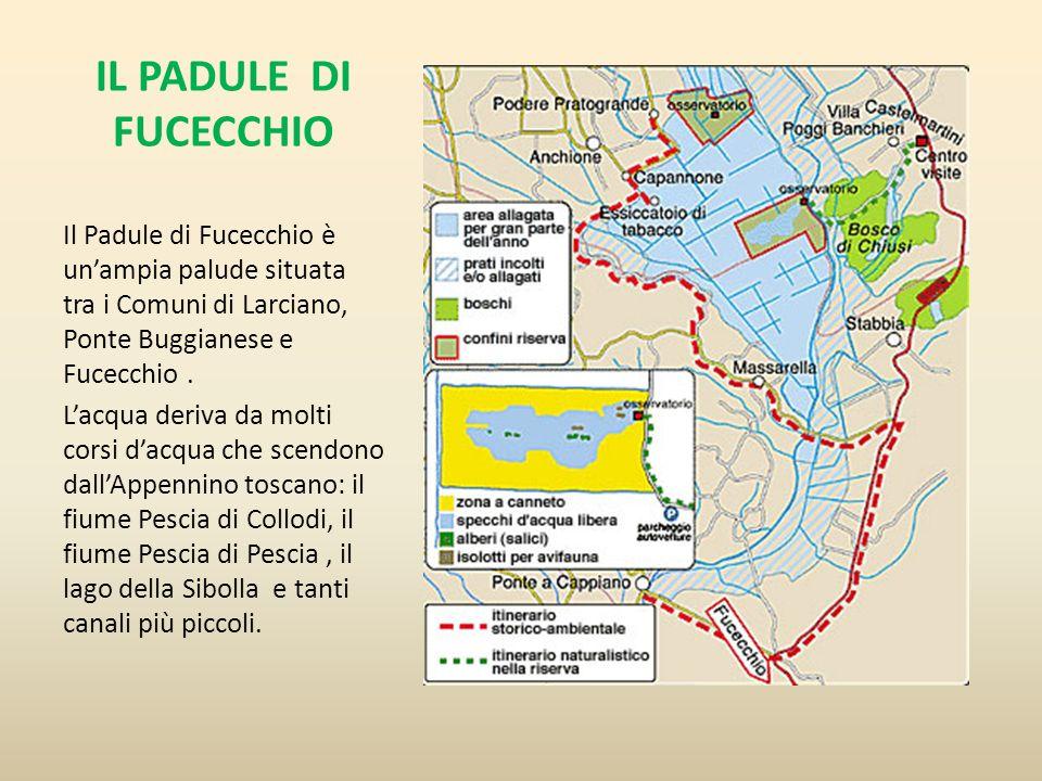 IL PADULE DI FUCECCHIO Il Padule di Fucecchio è un'ampia palude situata tra i Comuni di Larciano, Ponte Buggianese e Fucecchio .