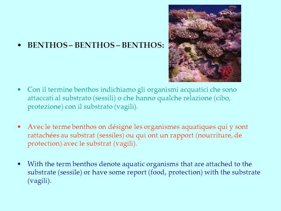 BENTHOS – BENTHOS – BENTHOS:
