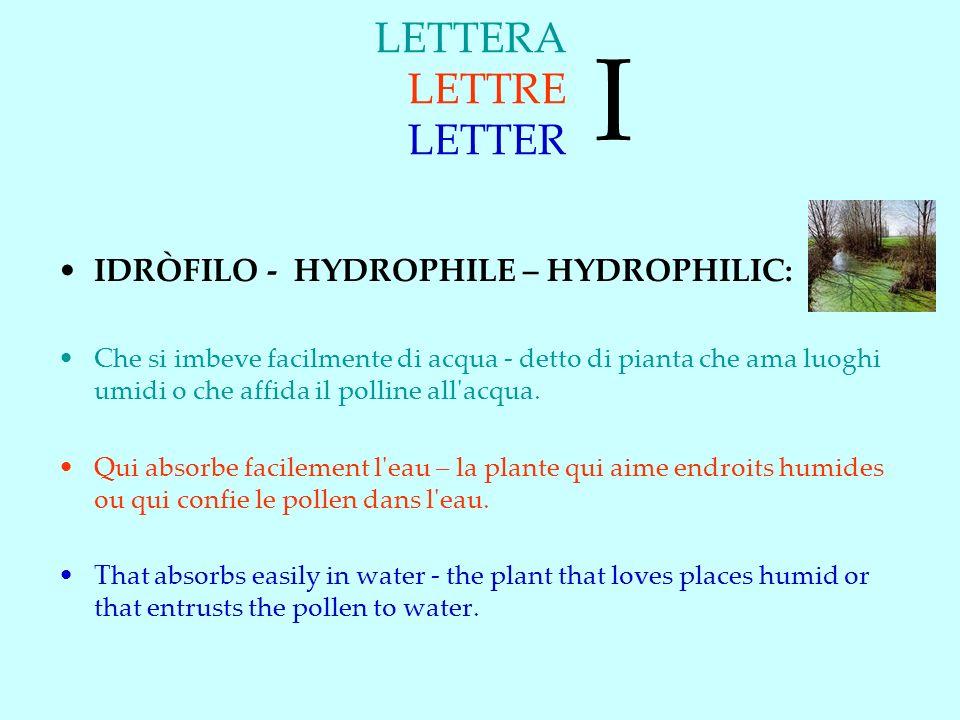 I LETTERA LETTRE LETTER IDRÒFILO - HYDROPHILE – HYDROPHILIC:
