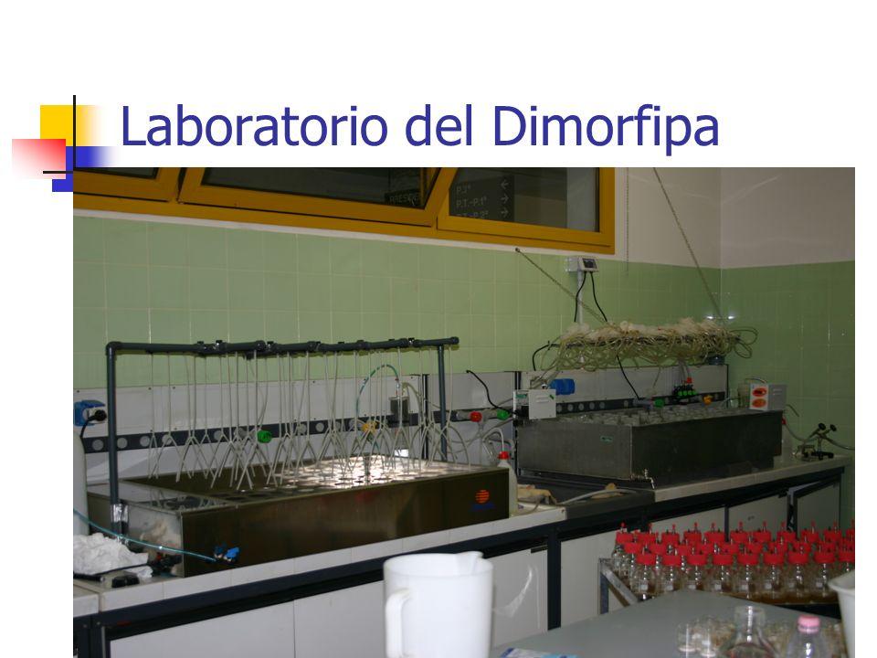 Laboratorio del Dimorfipa
