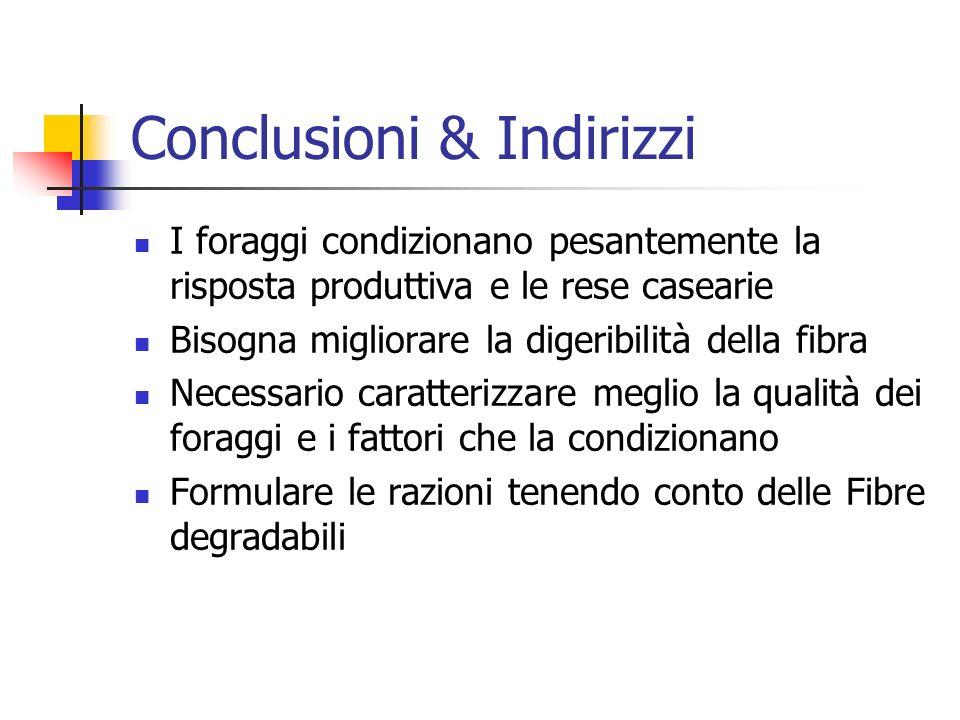 Conclusioni & Indirizzi