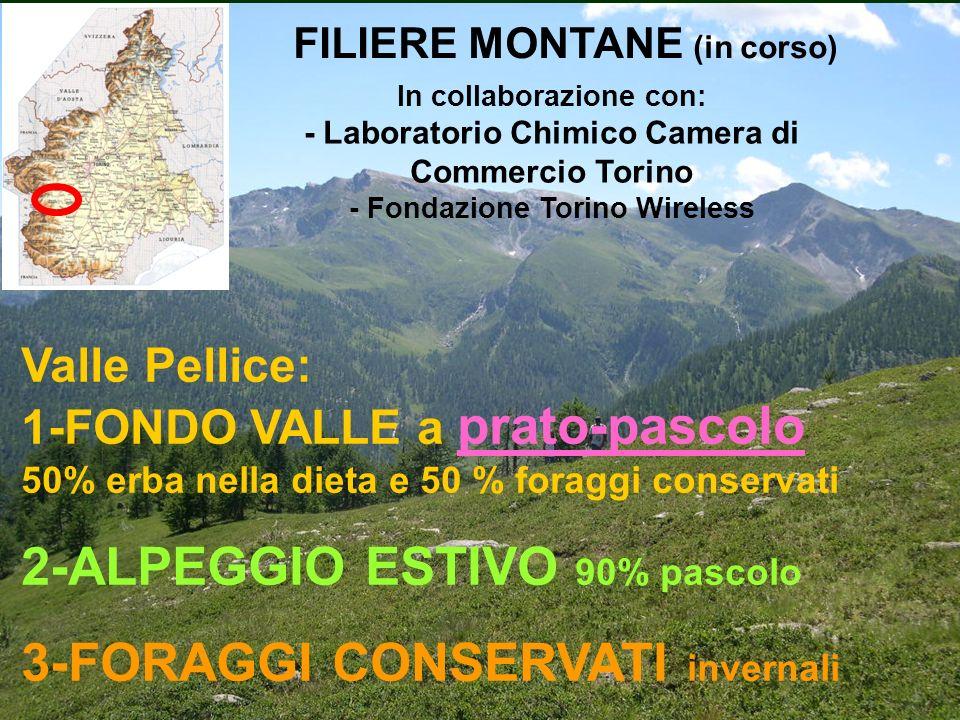 FILIERE MONTANE (in corso)